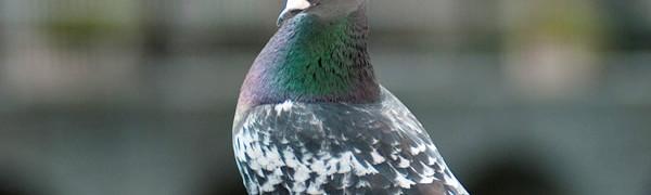 鳩害について真剣に考える